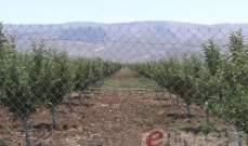 وزارة الزراعة فرص واعدة لدعم الاقتصاد الوطني