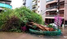 إقتلاع شجرة وسقوط عمود كهرباء بسبب الرياح عند مستديرة أدونيس في كسروان