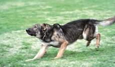 النشرة: اصابة ولدين اثر تعرضهما لهجوم من قبل كلب في بلدة الدوير