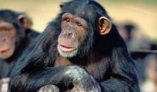 تحسين ذاكرة القردة!