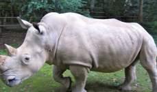 نفوق آخر ذكر في العالم من وحيد القرن الأبيض الشمالي