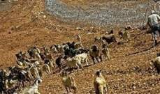 الجيش: دورية إسرائيلية حاولت خطف أحد الرعاة اللبنانيين في مزرعة بسطرة