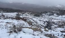 النشرة: تساقط الثلوج على ارتفاع 1400 متر بقضاء راشيا