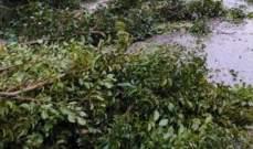 النشرة: سقوط شجرة كبيرة في منطقة الشرحبيل في بلدة بقسطا نتيجة العاصفة