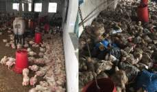العاصفة تدمّر مزرعة للدجاج في حومين الفوقا