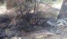 الدفاع المدني: إخماد حريق حرج من الصنوبر في جورة البلوط
