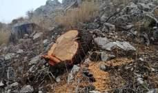"""""""كشافة البيئة"""" استنكرت المجزرة بحق الأشجار المعمرة في منطقة القلة- عكار"""
