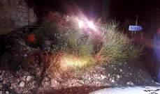 سقوط شجرة وسط طريق عام بلدة النمورة في كسروان