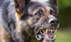 إصابة 6 أشخاص بعدما هاجمهم كلب مسعور في ميفدون والنبطية الفوقا