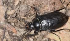بلدية زحلة:لعدم مكافحة الحشرات السوداء بالسموم لأنها مفيدة للطبيعة