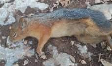 صيادون أقدموا على قتل 12 سنجابا داخل غابة العزر الفريدة بخراج بلدة فنيدق