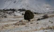 الثلوج غطت المرتفعات الجبلية في محافظة عكار وانقطاع عدد من الطرق