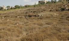 16 قطعة أرض بالتعزانية لأمير قطري: لماذا؟