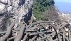 مجهولون قطعوا 15 طنا من الحطب في غابة عفص العكارية
