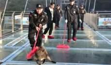 خنزير بري يهاجم الركاب في محطة مترو ويصيب امرأة