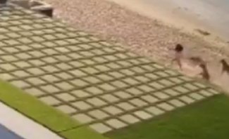 كلاب شاردة تهاجم طفلة على شاطئ للسباحة في الكويت