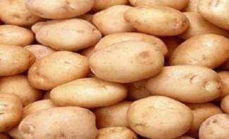 النشرة:مزارعو البطاطا يواجهون عمليات تهريب البطاطا من سوريا الى لبنان