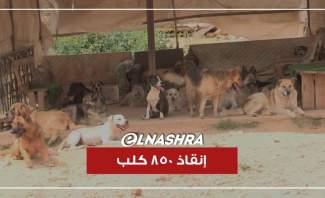 إنقاذ 850 كلب من مصير مجهول... هذه هي كلّ التفاصيل
