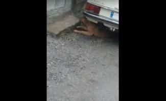 تسمّم كلاب في بلدة دير العشاير ونفوق عدد منها بعد إنذارات وجهتها البلدية بهذا الخصوص