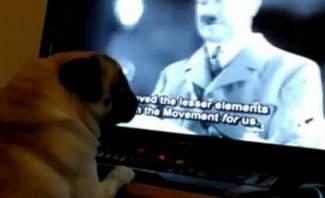 اعتقال رجل يعلم كلبه تأدية تحية هتلر
