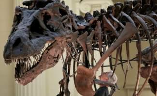 علماء يكشفون أضخم كائن حي عاش على وجه الأرض