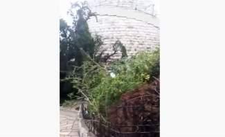 الرياح القوية تقتلع شجرة من الباحة الخارجية لمزار سيدة حريصا