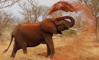 فيل يهاجم سيارة مليئة بالسياح