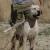 علماء: الكلاب تهدد أكثر من 200 فصيل من الحيوانات البرية بالانقراض