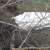 الفئران قضت على الاشجار بجرد فنيدق والمزارعون طالبوا وزارة الزراعة بمكافحة هذه الآفة