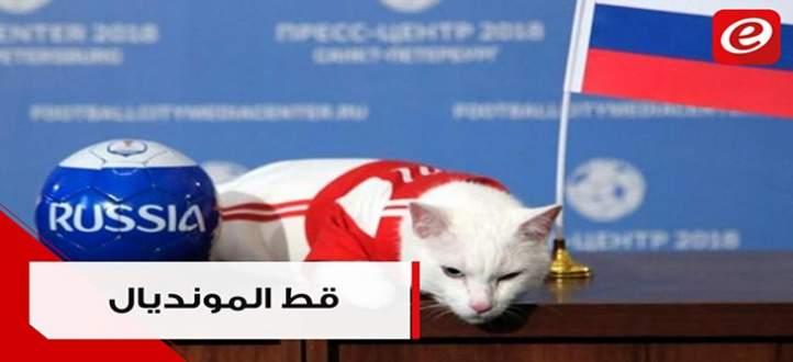"""القط """"اخيل"""" يتوقع نتائج مبارايات مونديال روسيا"""