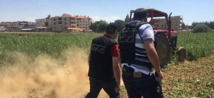 إتلاف مزروعات على ضفاف الليطاني وتحرير ضبط مخالفة بحق من يروي من النهر