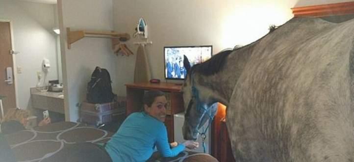 سيدة تحجز غرفة فندقية برفقة حصانها