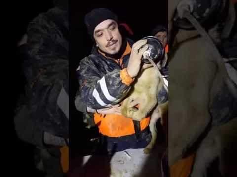 """الكلب """"كويو"""" يشغل تركيا 11 يوماً"""