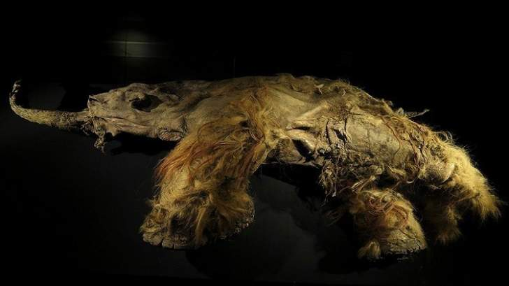شفرة جينوم للحيوانات القديمة يفكها العلماء الروس