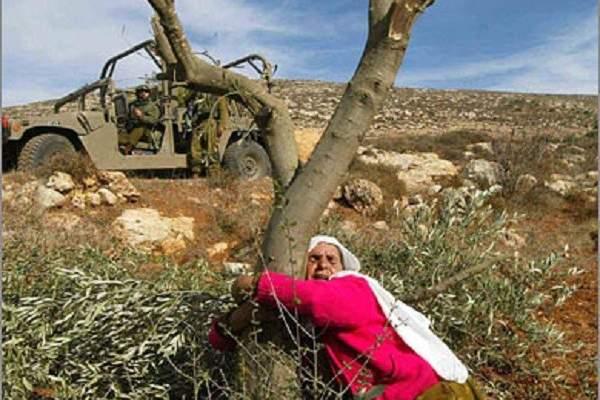 من فلسطين إلى عفرين