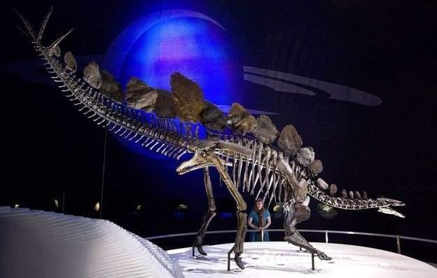 اكتشاف ديناصور ينتمي إلى جنس كان موجودًا منذ حوالي 168 مليون عام