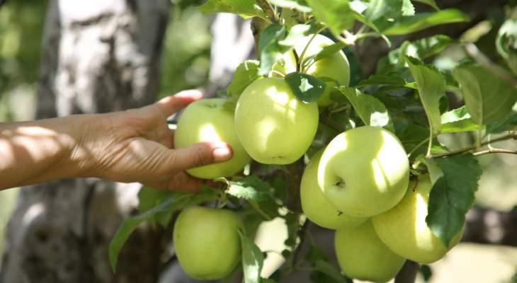 منظمة الأغذية والزراعة بالأمم المتحدة: نساعد وزارة الزراعة ببناء نظام رصد تلوث الأغذية