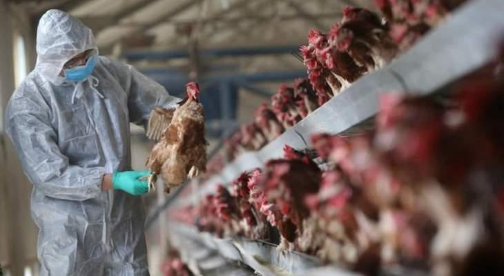 """الحكومة الهندية أعلنت أول وفاة بإنفلونزا الطيور """"H5N1"""""""