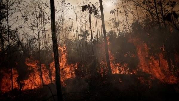 رصد 1663 حريقًا جديدًا في البرازيل نصفهم في غابات الأمازون