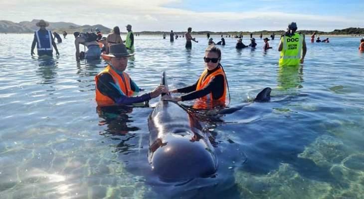 جنوح مجموعة جديدة من الحيتان الطيارة على سواحل نيوزيلندا