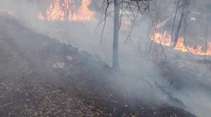 MTV: تجدد الحريق في منطقة الدبية في الشوف