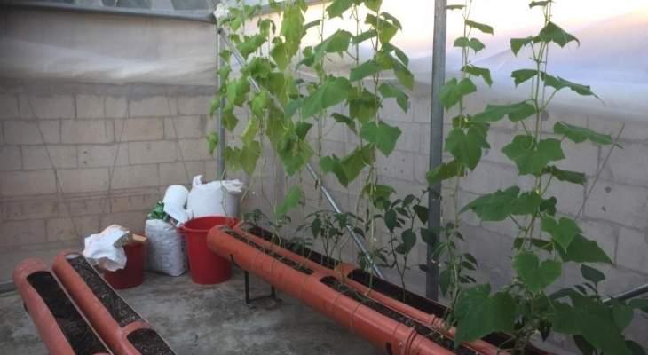 """مشروع الزراعة على أسطح منازل """"عين الحلوة""""... ظاهرة جديدة لتوفير القوت اليومي"""