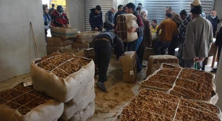 مزارعو ميس الجبل طالبوا برفع أسعار محصول التبغ 150%