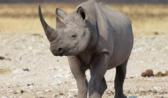 حديقة حيوانات تعلن ولادة أنثى لوحيد القرن الأبيض في فلوريدا
