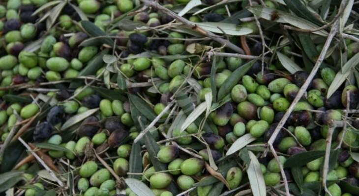 تجمع هيئات قطاع الزيتون: لمنع استيراد زيت الزيتون ومصادرة اي كمية تدخل لبنان