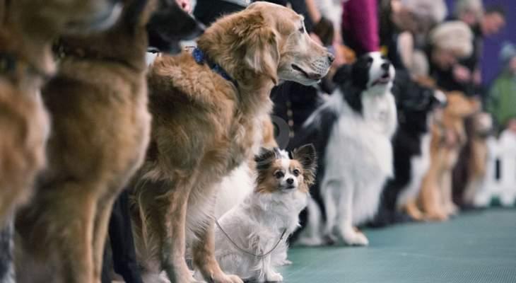 سلطات الولايات المتحدة تحظر استيراد الكلاب من 113 دولة بينها لبنان