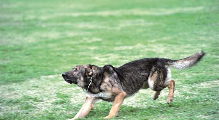 كلب مسعور هاجم مواطنين اثنين في عين جرفا