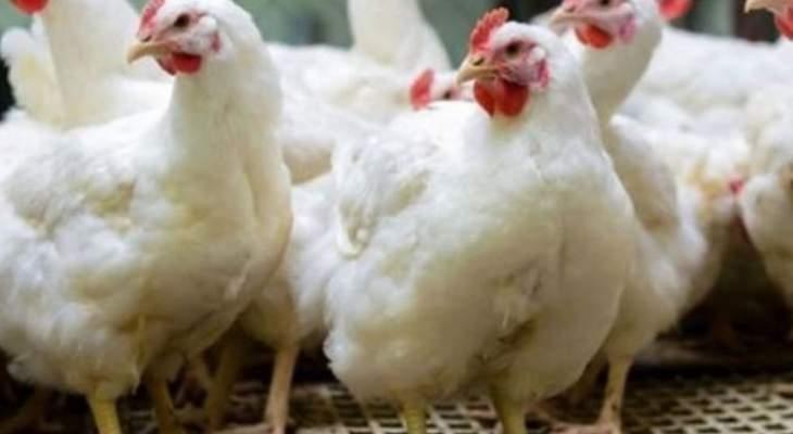 سرقة 70 طير دجاج من بلدة كفرحونة