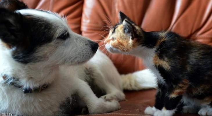 """الصين ترفع القطط والكلاب من قائمة الحيوانات """"القابلة للأكل"""""""