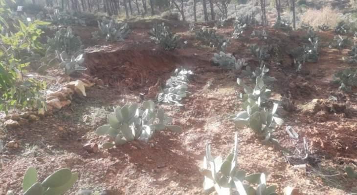 النشرة: تضرر بستان مغروس بأشجار الصنوبر والصبار بسبب العاصفة بحاصبيا